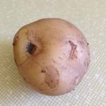Allotment Potato