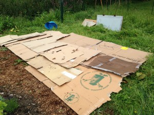 no dig vegetable bed cardboard layer