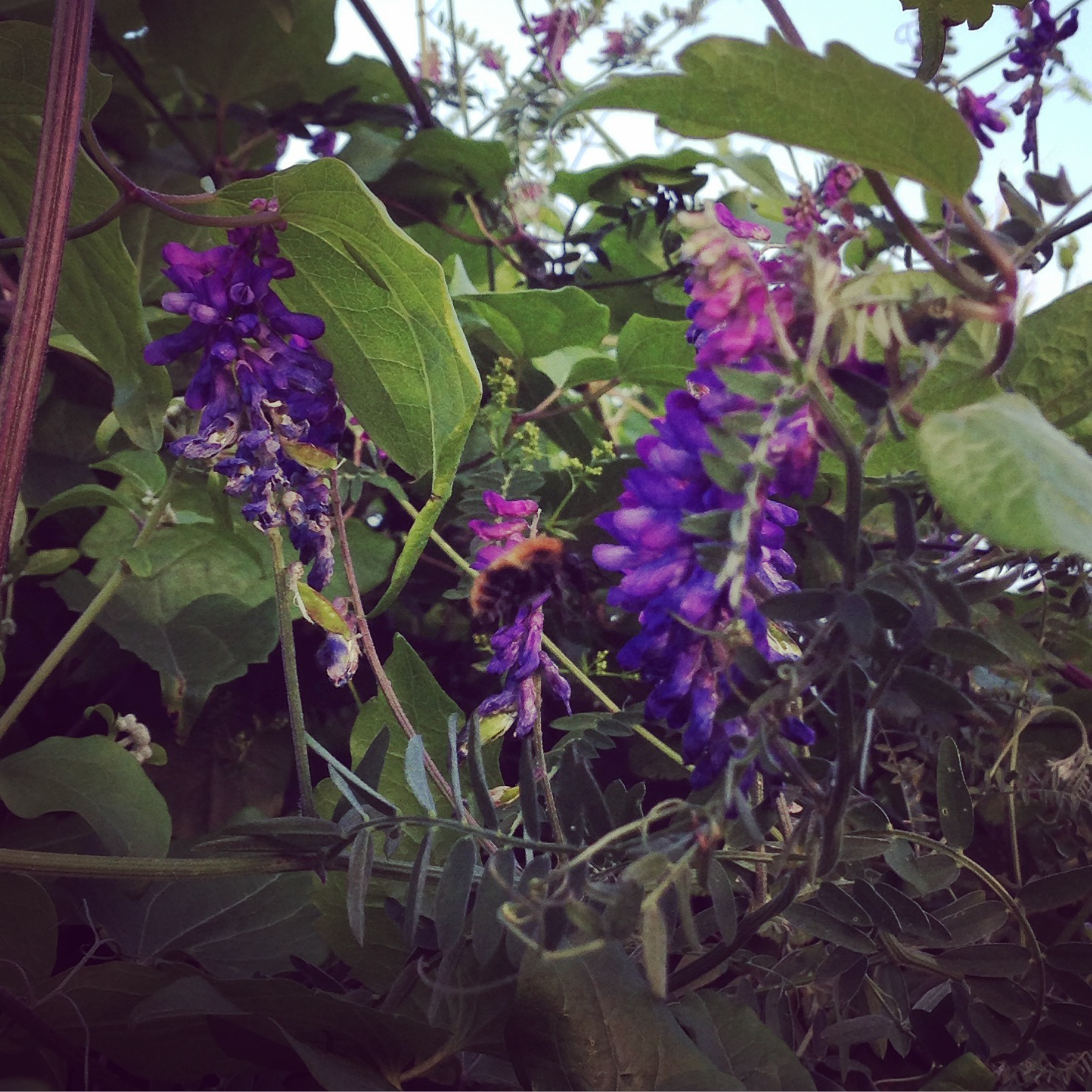 Brilliant Bees, Fabulous Flowers