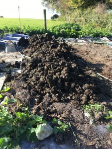 manure on beds