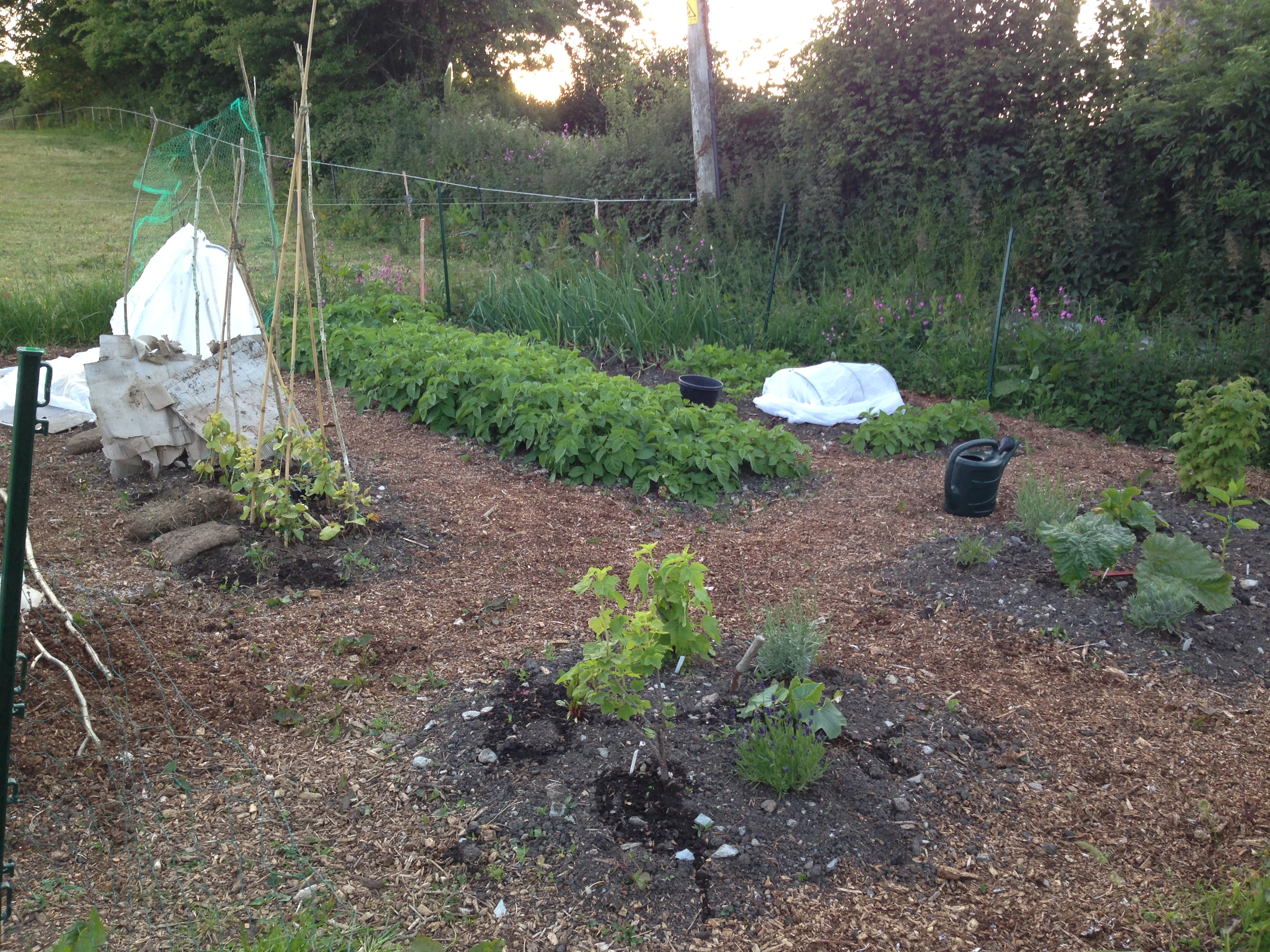 A quick visit to the allotment
