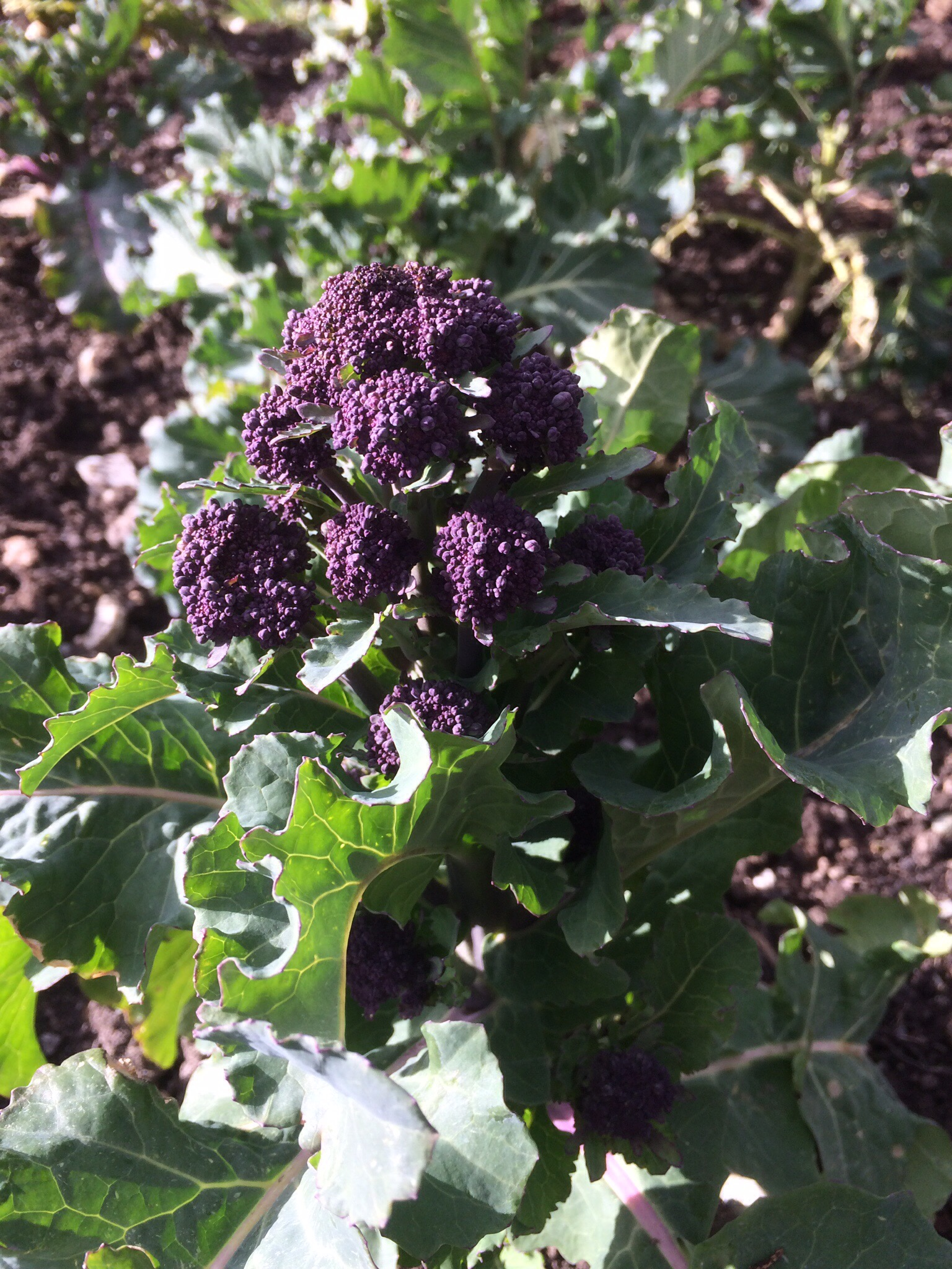 March 2016 trip to the allotment